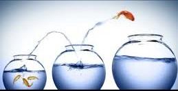 3 Fish Bowls